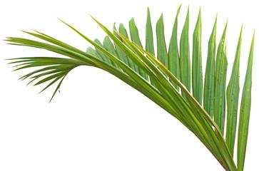palme fond blanc