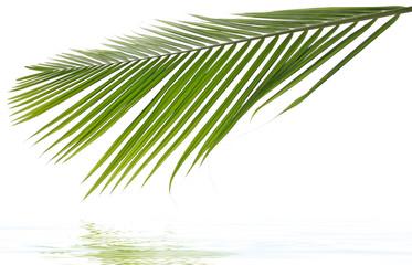 palme exotique fond blanc