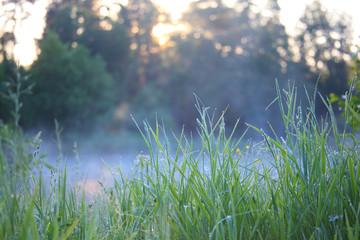 Dawn in the foggy morning