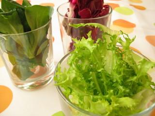 Dreierlei Salat im Glas serviert