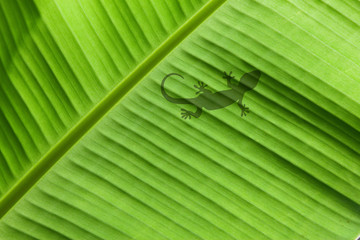 Gecko auf Palmenblatt
