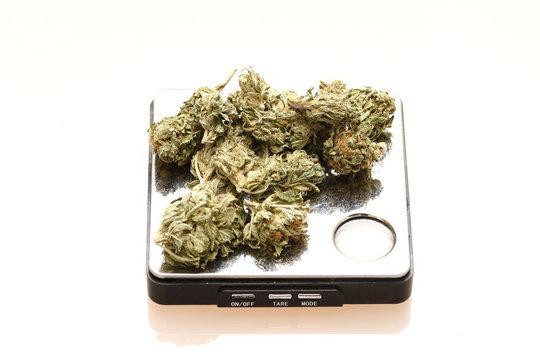 Medical marijuana on a digital scale.