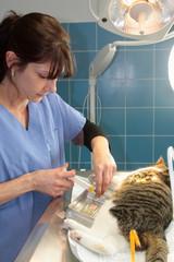 prélèvement vétérinaire
