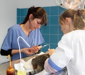 chirurgie vétérinaire
