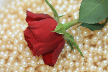 Red rose on pearls