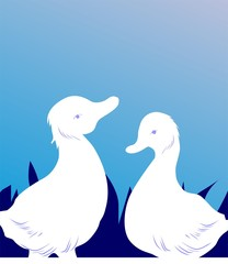 Illustration of two ducklings in blue background