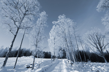 snowy road with birch-trees