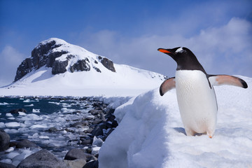 Penguin at the end of earth in Antarctica
