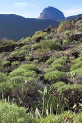 Kakteenlandschaft - Teneriffa - Landscape of cactuses