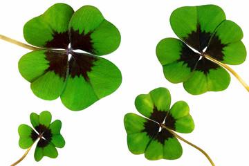 Vier Kleeblätter