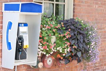 Public telephone beside flowers on outside wall