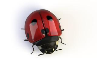 isolated ladybird