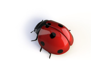 isolated ladybird