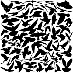 Pigeon silhouettes