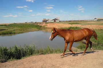 Horse at the river