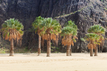 Palmen von San Andrés - Teneriffa - Tenerife