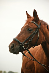 Pony Belle