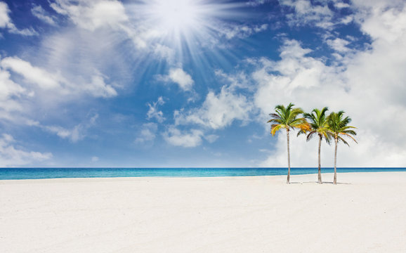 Tropical paradise with palm trees in Miami Florida