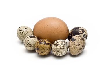 Huevo de gallina y varios de codorniz.