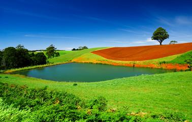 Colourful Field