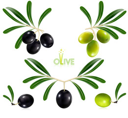 Photorealistic vector illustration. Green olives with leaves.