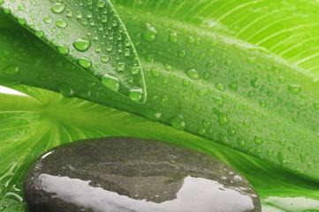 green leaf and grey stone