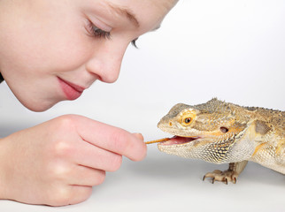 boy feeding lizard