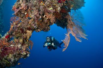 Plongeuse et photo sous marine, Mer Rouge, Egypte