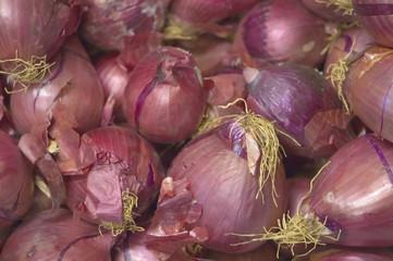 Cipolla rossa (Allium Cepa)