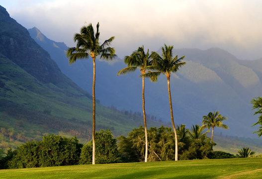 Palm trees and mountains on Oahu, Hawaii