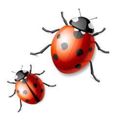 Ladybird. Vector.