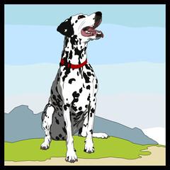 Keuken foto achterwand Honden Dalmatian