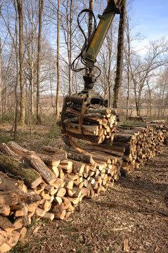 ramassage de bois de chauffage