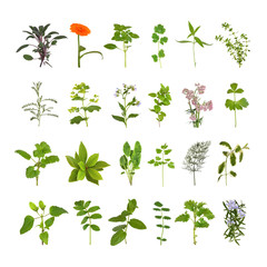 Herb Flower and Leaf Collection