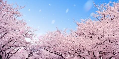Photo sur Plexiglas Rose clair / pale 桜