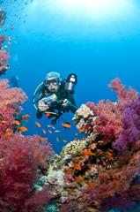 Plongeuse et photo sous-marine sur le récif, Mer Rouge, Egypte