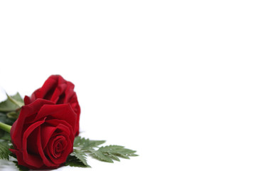 Zwei Rosen mit Efeu