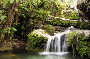 Wall Murals Waterfalls Rainforest waterfall