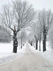 Avenue in winter