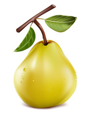 Photo-realistic vector. Ripe pear with water drops.