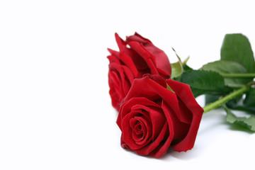 Zwei schöne rote Rosen