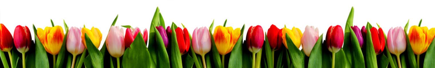 rang de tulipes
