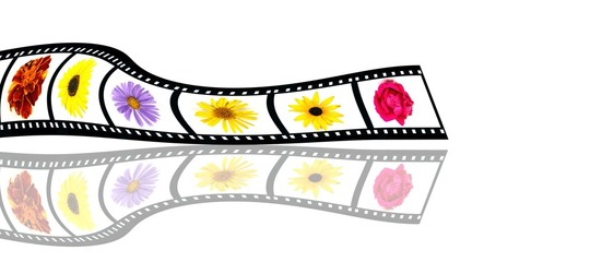 Film stripe with kinds of flower blossoms with reflection