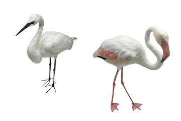 egret and flamingo