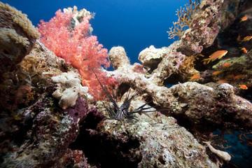 fish, ocean and coral
