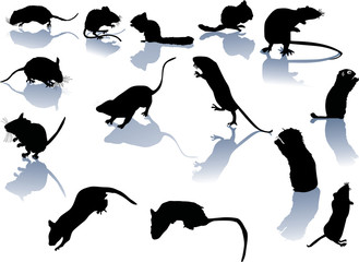 fourteen rodent silhouettes