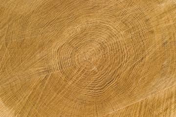 Obraz Drewno dębowe - fototapety do salonu