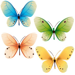 butterflies colors