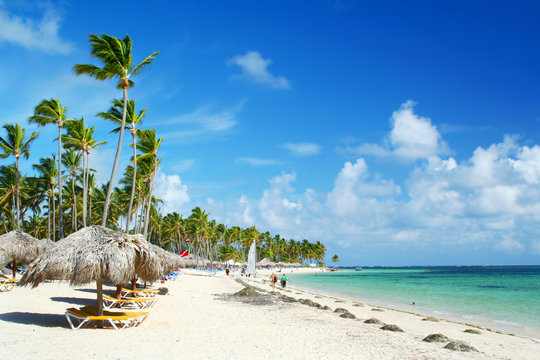 Caribbean resort beach with palm trees and sunshades
