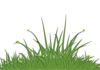 Summer grass.